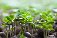 Grow your own Micro Greens