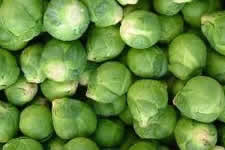 Grow your own Brussels Sprouts